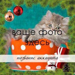 christmas_pine_frame_insta